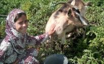 Больше «долговременной милостыни»: одесские мусульманки помогли еще двум вдовам