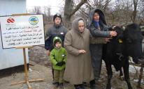 Корова для малообеспеченной семьи