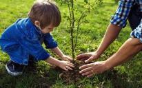 Долучайтеся до соціального проєкту «Мільйон дерев» 17 жовтня разом з Ісламськими центрами!