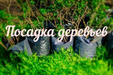 GreenDeen планирует масштабную экоакцию в Киеве