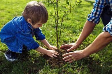 Приобщайтесь к социальному проекту «Миллион деревьев» 17 октября вместе с исламскими центрами!